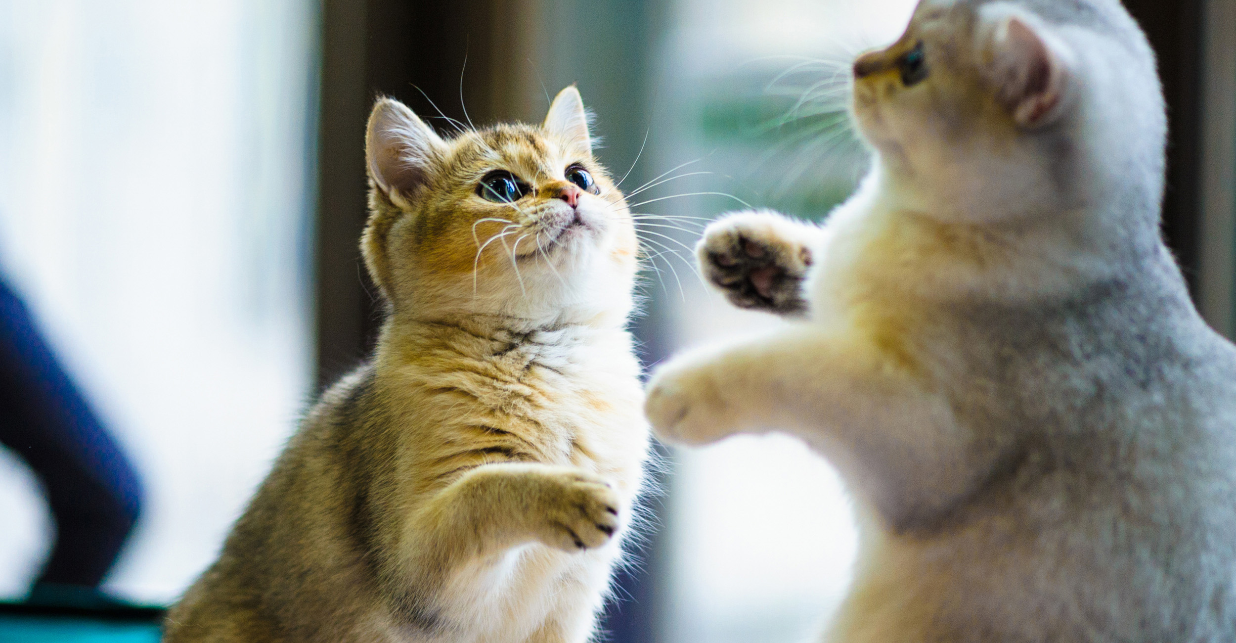 Homepageslider_kittens#1_2500x1300px